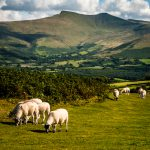 brecon beacons national park : wales : united kingdom : 2016