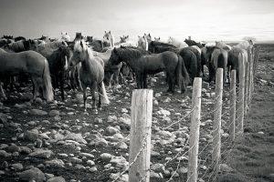 strangakvísl : iceland : 2009